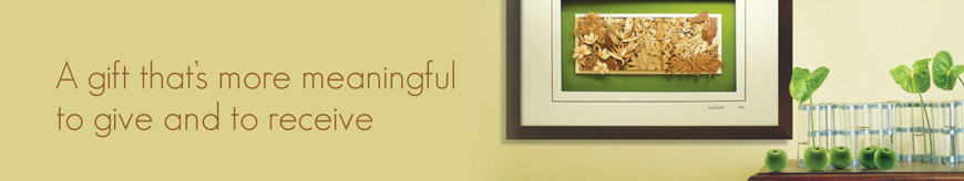 banner_ourcollection